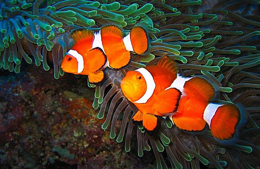 为什么鱼有淡水鱼、海水鱼之分